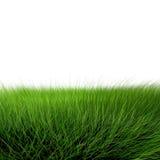 красивейший зеленый цвет травы Стоковые Изображения RF