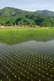 красивейший зеленый цвет фермы Стоковое Фото
