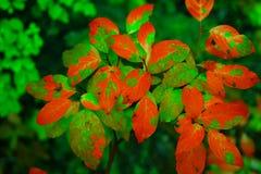 красивейший зеленый цвет Стоковое Фото