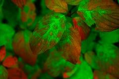 красивейший зеленый цвет Стоковое фото RF