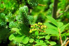 красивейший зеленый цвет Стоковое Изображение RF