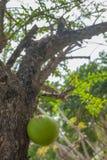 красивейший зеленый вал Стоковое Фото