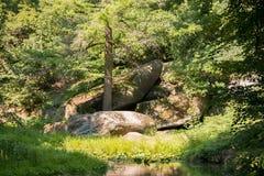 красивейший зеленый парк Стоковое Изображение RF