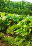 красивейший зеленый лужок Стоковое Фото