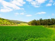 красивейший зеленый цвет поля Стоковая Фотография