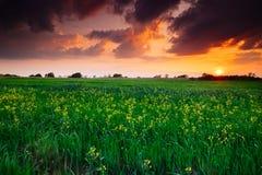 красивейший зеленый цвет поля стоковые изображения rf