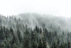 красивейший зеленый цвет пущи Стоковая Фотография RF