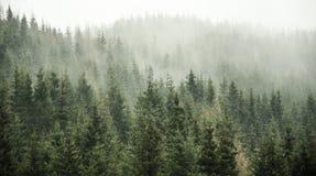 красивейший зеленый цвет пущи Стоковое фото RF