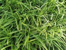 красивейший зеленый цвет травы длиной Стоковое Изображение