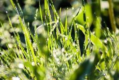красивейший зеленый цвет травы Стоковые Изображения
