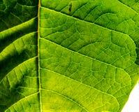красивейший зеленый цвет Стоковое Изображение