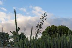 Красивейший кактус Стоковые Изображения