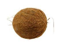 красивейший кокос Стоковые Изображения