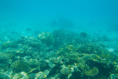 красивейший коралловый риф Стоковое Изображение
