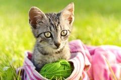 красивейший котенок Стоковые Изображения