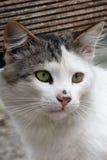 красивейший кот Стоковое Фото