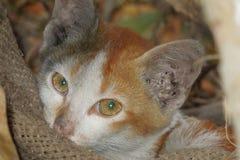 красивейший кот Стоковые Изображения RF