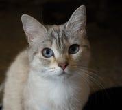 красивейший кот Стоковые Фото
