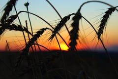 Красивейший красный заход солнца Стоковая Фотография RF