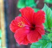 Красивейший красный цветок Стоковое Фото