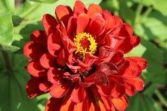 Красивейший красный цветок стоковое изображение rf