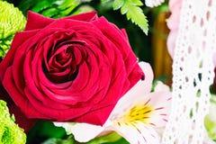 красивейший красный цвет поднял Стоковое фото RF