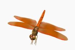 красивейший красный цвет dragonfly Стоковая Фотография