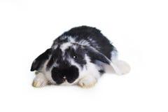 красивейший кролик стоковые изображения rf