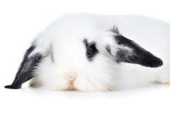 красивейший кролик стоковые фото