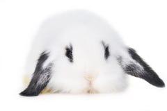 красивейший кролик стоковые изображения