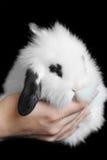 красивейший кролик стоковая фотография