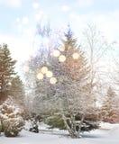 Красивейший ландшафт зимы с снежком покрыл деревья стоковое фото rf