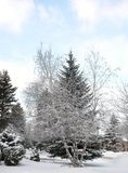 Красивейший ландшафт зимы с снежком покрыл деревья стоковое изображение rf