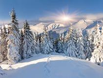 Красивейший ландшафт зимы стоковое изображение