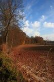 красивейший ландшафт падения Стоковая Фотография RF