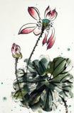 красивейший лотос цветка иллюстрация штока