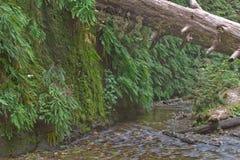 Красивейший малый поток Стоковые Фото