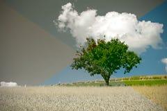 красивейший мир стоковая фотография rf