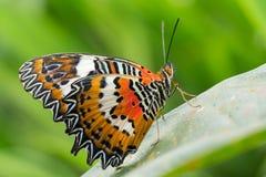 красивейший монарх бабочки Стоковое Изображение