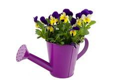 красивейший мочить фиолетов пинка чонсервной банкы стоковое фото