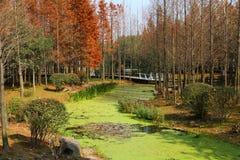 красивейший пейзаж озера Стоковая Фотография