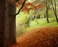 красивейший пейзаж падения Стоковые Фото
