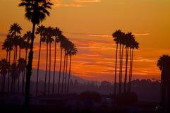 красивейший передний план компьютера произвел валы вала захода солнца фото ладони изображения реалистические Стоковая Фотография RF