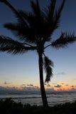 красивейший передний план компьютера произвел валы вала захода солнца фото ладони изображения реалистические Стоковые Изображения RF