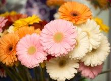 красивейший пинк цветка Стоковые Фото