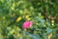 красивейший пинк цветка Стоковая Фотография RF