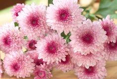красивейший пинк цветков Стоковые Фотографии RF