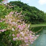 красивейший пинк цветков Стоковые Фото