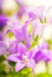 красивейший пинк цветков Стоковые Изображения