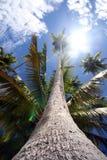 Красивейший пляж Стоковое Фото